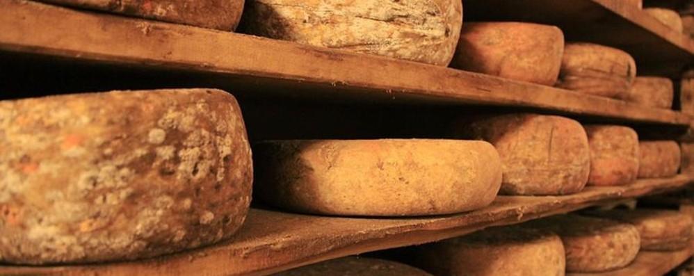Giornata all'insegna  del formaggio