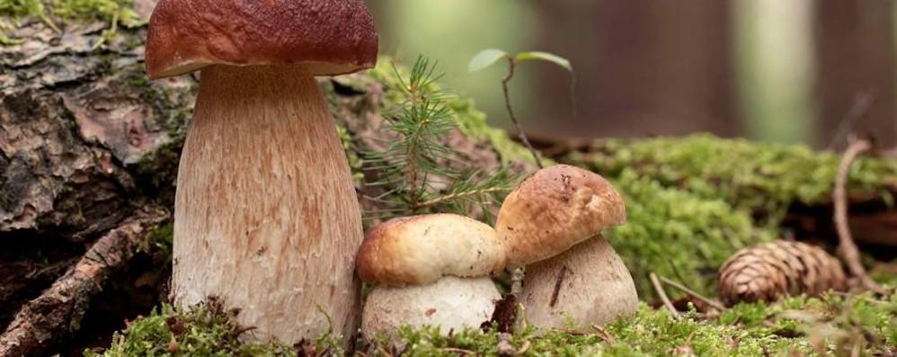 Mangiano funghi, 10 persone intossicate Il decalogo dell'Ats per non rischiare