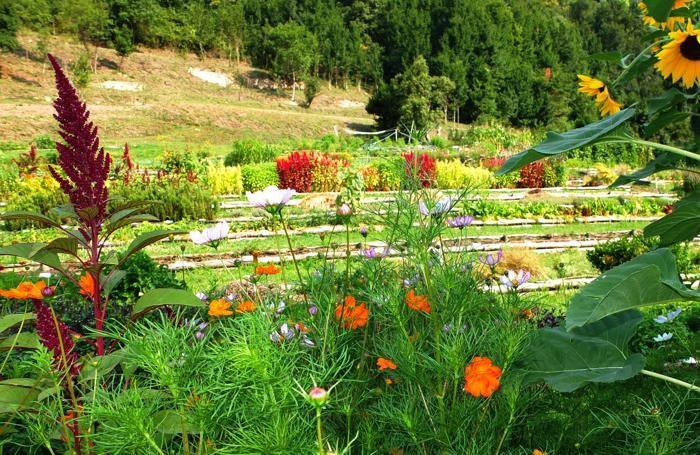 La Valle della Biodiversità di Astino - foto di Gianfranco Cattaneo per l'Archivio fotografico dell'Orto botanico di Bergamo