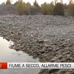 Alzano Lombardo, fiume Serio a secco