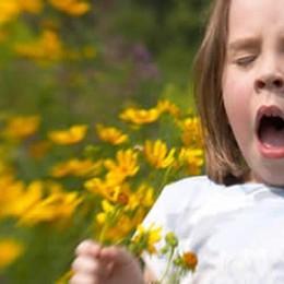 Pollini, insetti, cibo e farmaci Cinque incontri sulle allergie