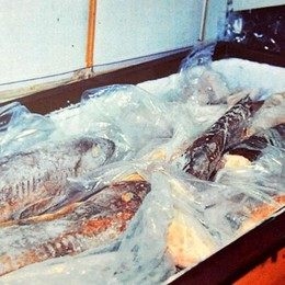 Bergamo, maxi sequestro di pesce Arrivato dall'Asia per ristoranti etnici