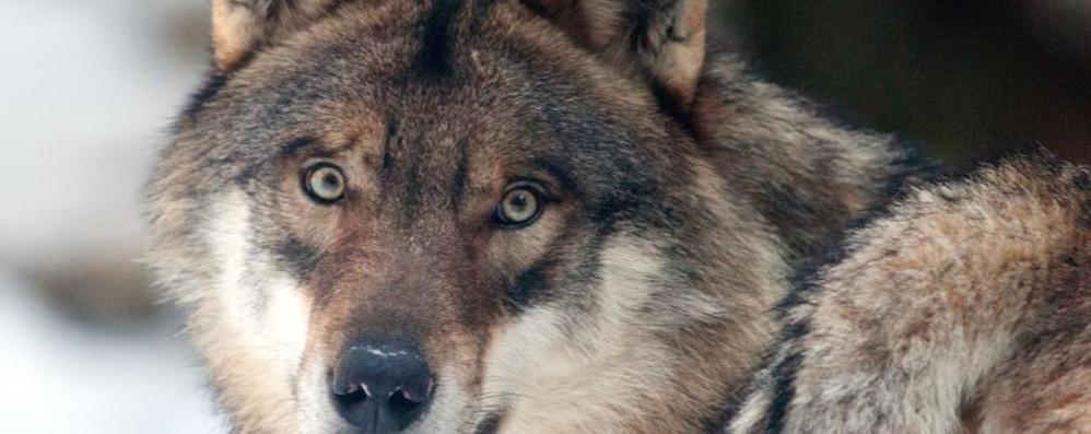 Al «Grande sentiero» la «Valle dei lupi»