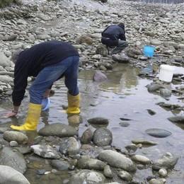 Alzano, lavori e siccità, il Serio a secco Cittadini (volontari) salvano 3mila pesci