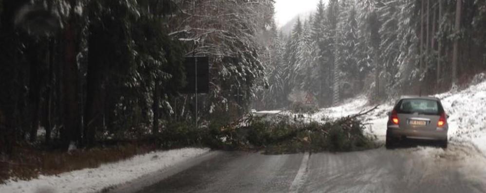Cade un albero in mezzo alla strada A Clusone pericolo scampato - Foto