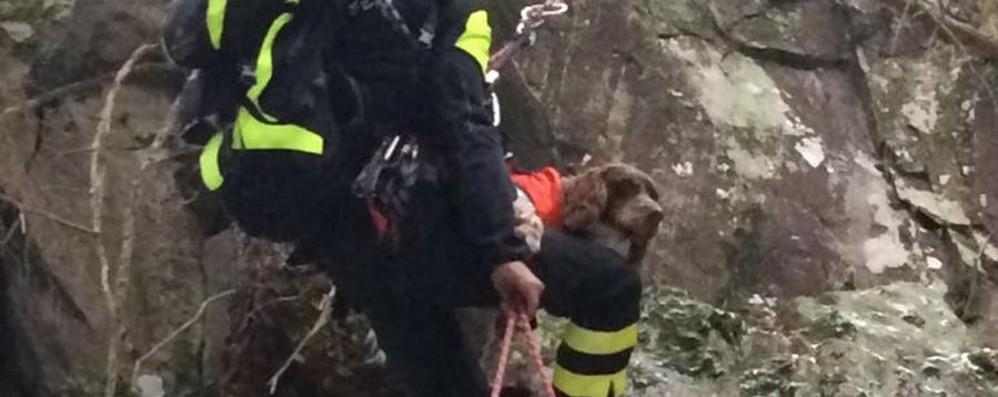Santa Brigida, cane cade in una scarpata «Magia» dei Vigili del Fuoco, è salvo!
