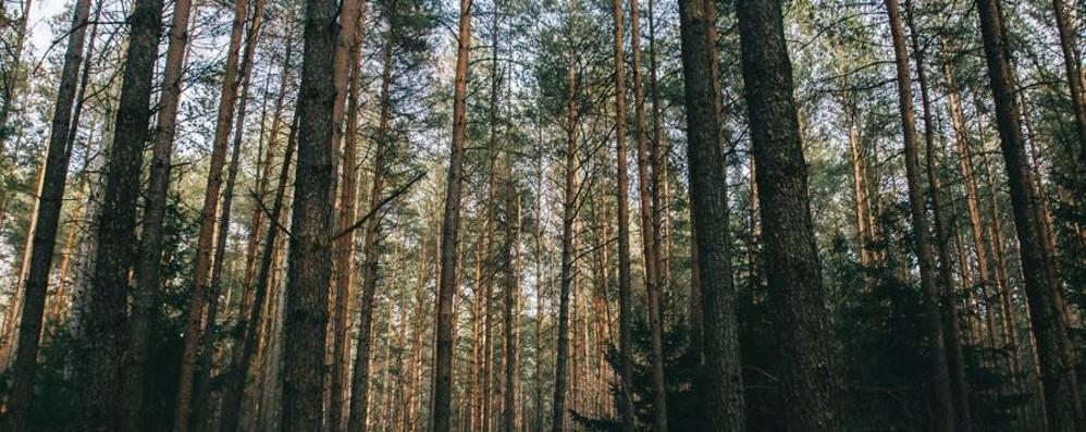 «Per i giovani brembani lavoro nei boschi» Progetto della Diocesi per l'occupazione