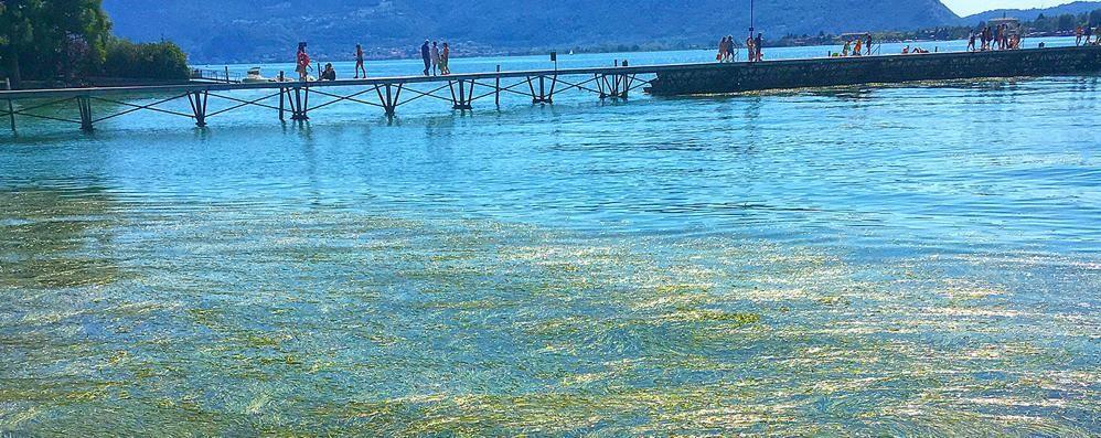 Lotta alle alghe nel lago d'Iseo Dalla Regione 450 mila euro