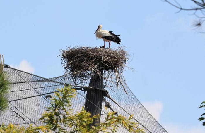 Il nido a Valbrembo