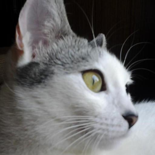 Chiesto Un Anno E Quattro Mesi Per Il Killer Dei Gatti Di Trescore
