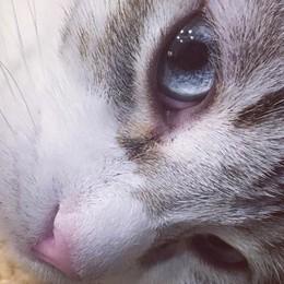 Miao, auguroni a tutti i gatti Oggi è la loro festa nazionale