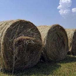Le Marche chiamano, Bergamo c'è Fieno per gli agricoltori terremotati