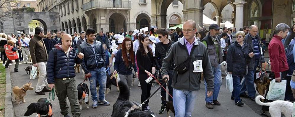 Il 2 aprile torna la Corri Dog Ecco come partecipare