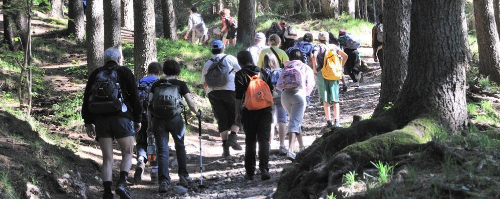 La meraviglia di camminare nel bosco Ecco come partecipare. Video e mappe