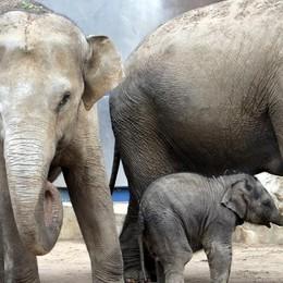 Valbrembo, nuova area a Le Cornelle Apre l'oasi Pinnawala per gli elefanti