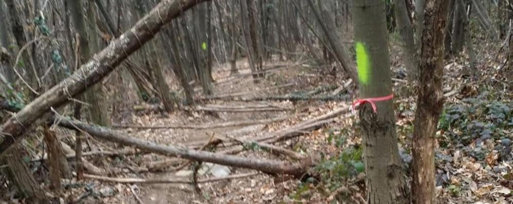 Fili di ferro sui sentieri della Maresana Nuove pericolose trappole per i bikers