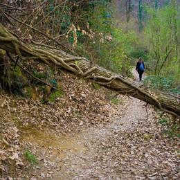 Incuria, frane e sentiero impraticabile Via dei vasi è «ferma» da 7 mesi - Foto