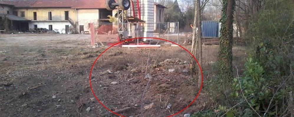 Zona Croce Rossa, alberi tagliati - Foto Minuti: «Pericolo di disboscamento»