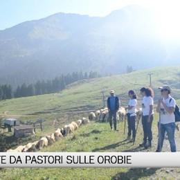 Imprenditori e operai insieme (tra lupi e orsi) per fare i pastori