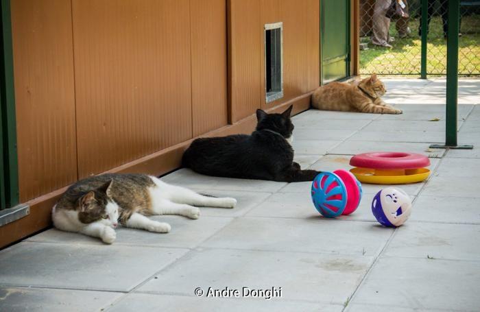 casa per gatti abbandonati a Madone