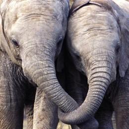 Alla Cornelle l'oasi degli elefanti Sabato apre «Pinnawala»
