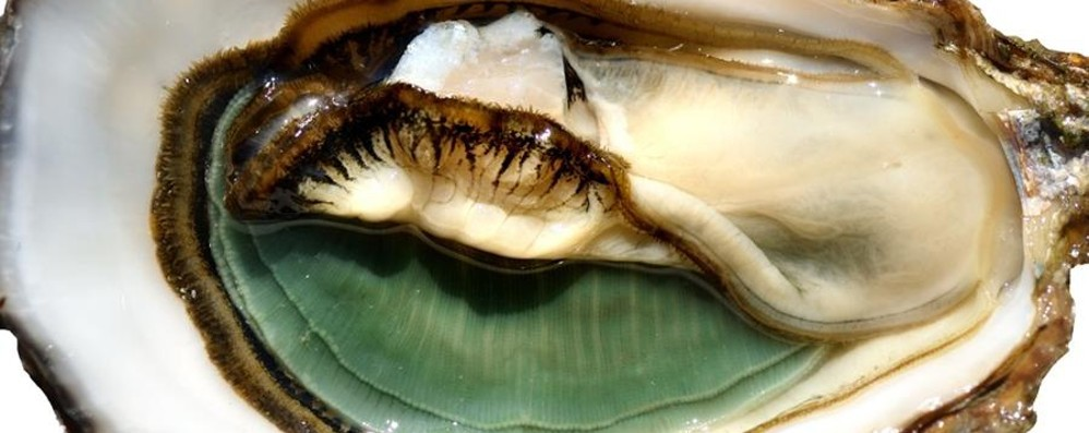 Le ostriche made in Bergamo a Firenze Nicoli protagonista di «Italia a Tavola»