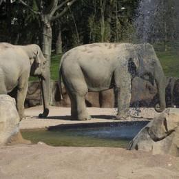 Una nuova oasi per gli elefanti Grande festa a Le Cornelle - Video