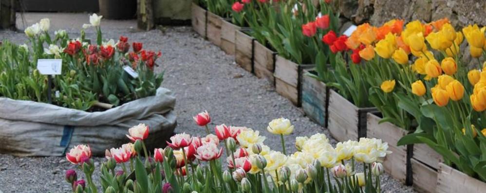Primavera all'orto Botanico -Foto Lo spettacolo dei 2000 tulipani in fiore