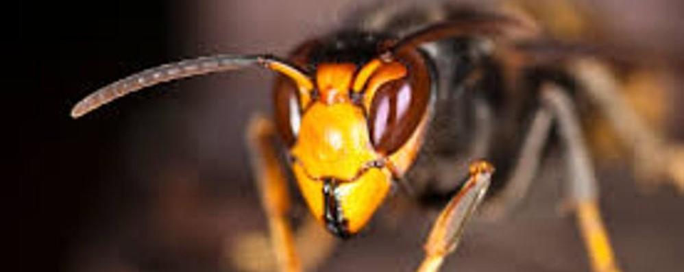 Clima pazzo e insetti «stranieri» Cresce il rischio di allergie
