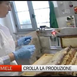 Maltempo, perso il 70% della produzione del miele