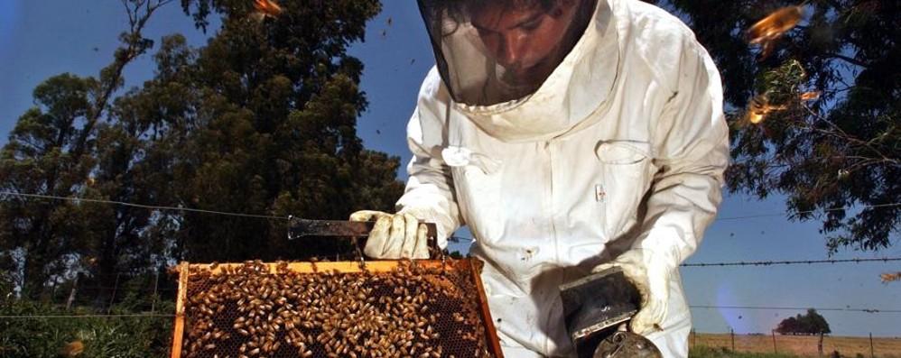 Primavera con freddo e pioggia «Persa metà della produzione di miele»