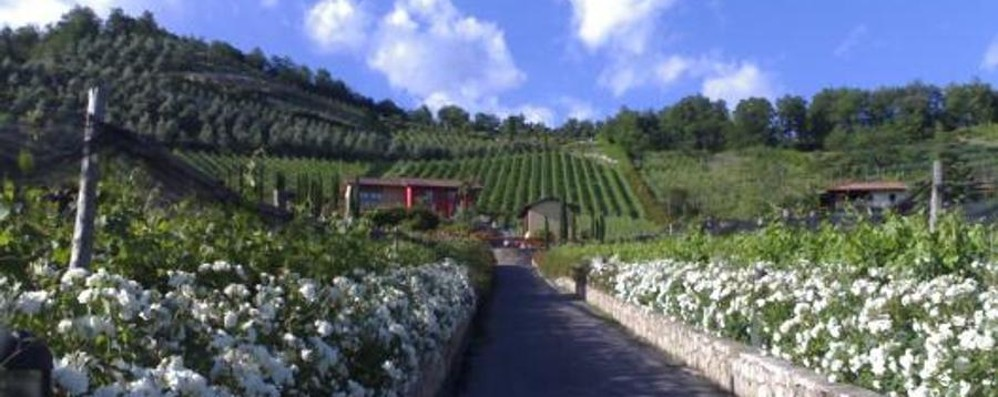 Un nuovo vino a Scanzo Il Vermiglio di Roxia
