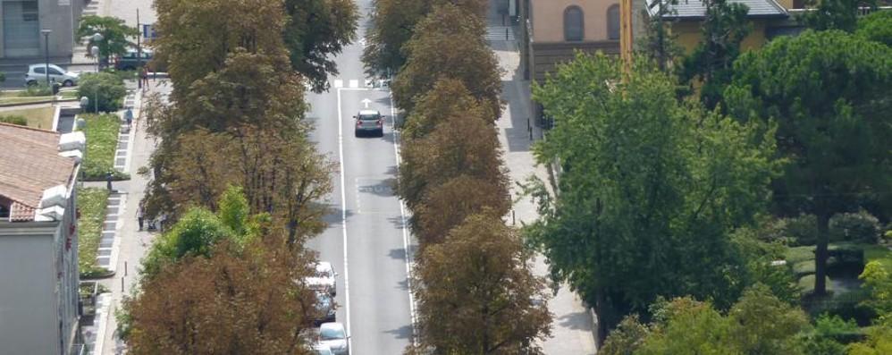 Bergamo città sempre più verde Ma 122 alberi verranno abbattuti