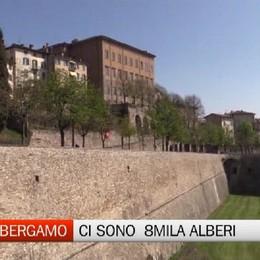 Ecco tutti gli alberi di Bergamo