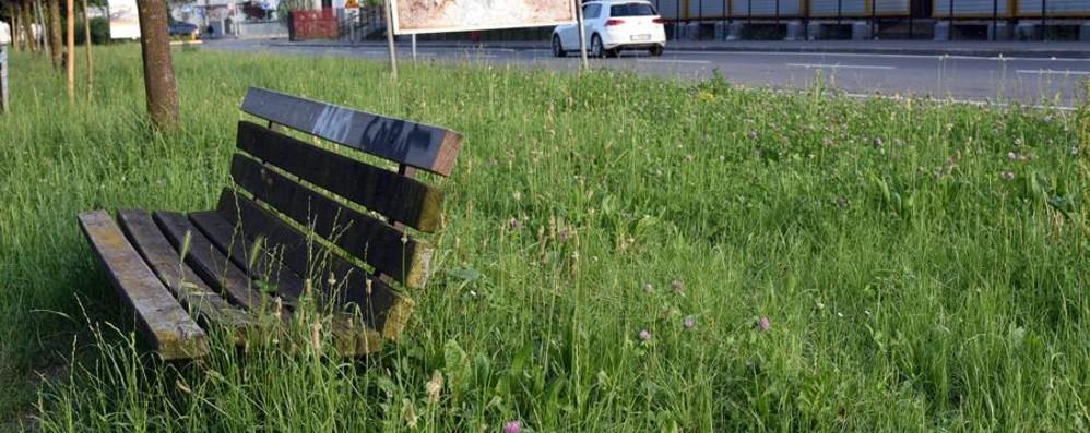 Bergamo, erba alta nelle aiuole? Si corre ai ripari con  il metodo svizzero