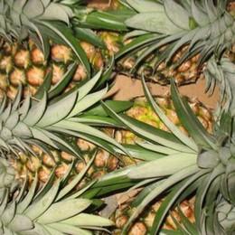 Ananas, zucchero di canna e kamut Ecco tutte le bufale alimentari sul web
