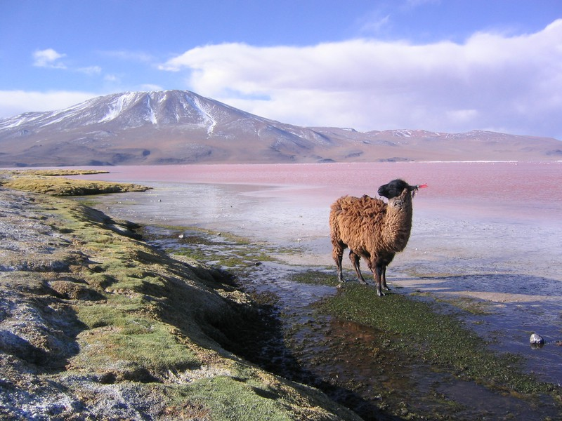 BOLIVIA: TRADIZIONI DELLE MONTAGNE CON DIVERSITÀ CULTURALE