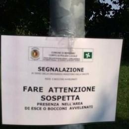 Bergamo, ancora bocconi avvelenati La denuncia corre su Facebook