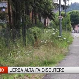 Verde pubblico, l'erba alta fa discutere anche a Longuelo