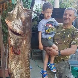Impresa del pescatore dilettante All'amo un siluro da due metri