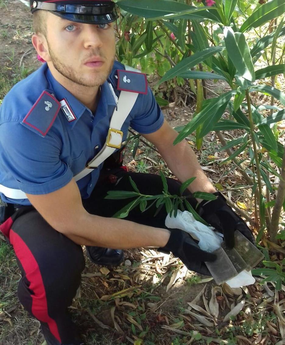 la droga rivenuta sotto gli alberi