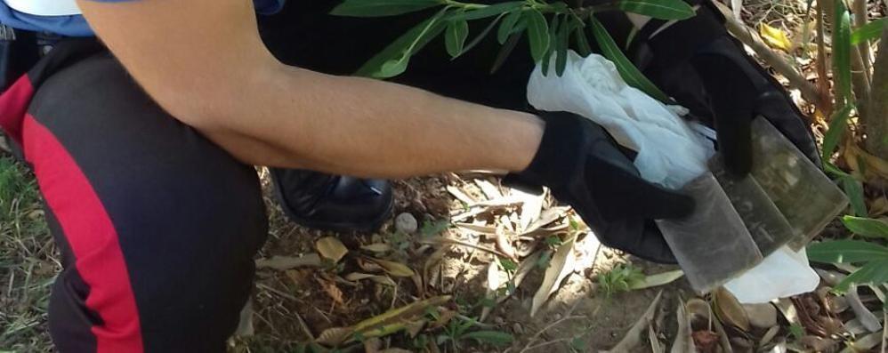 Zingonia, nuovo blitz a piazza Affari dove la droga «cresce» sotto gli alberi