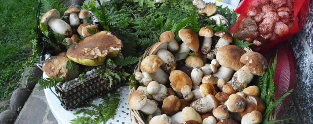 È un fungo commestibile? Solo il micologo lo può dire