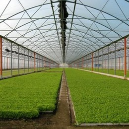 Campagna, è allarme furti nelle serre Rubate 1.000 valvole per irrigazione