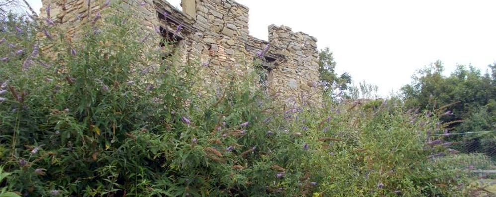 Dopo i vandali l'arbusto cinese Sos per l'antico borgo del monte Canto
