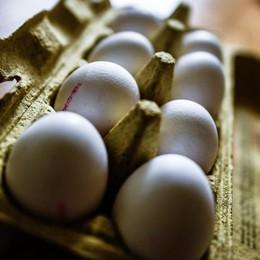 Coldiretti rassicura sulle uova italiane 41,6 milioni di galline «nazionali»