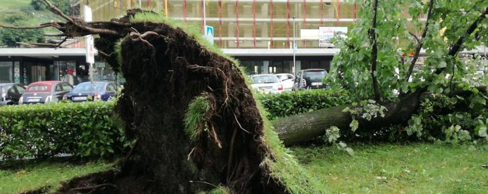 Valle Seriana, attimi di paura per il vento   Alberi sradicati sulle auto a Clusone -Foto