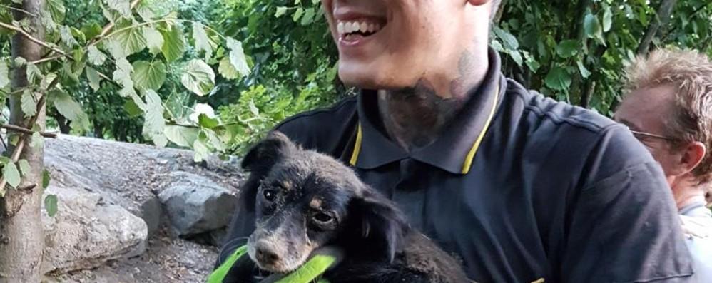 Cane «prigioniero» nella tana dei conigli Lo salvano i Vigili del Fuoco - Video