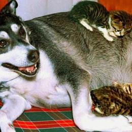 Con i nostri cani in vacanza? Ecco qualche utile consiglio