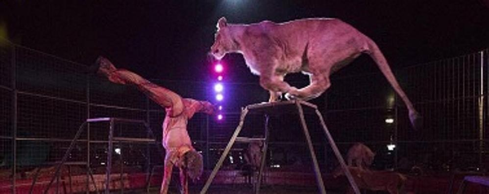 Il Circo di Mosca sbarca a Bergamo In scena dal 25 agosto al 24 settembre